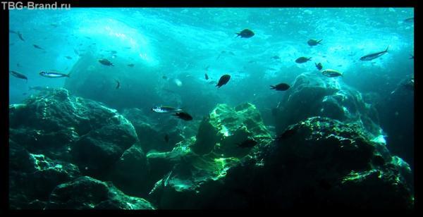 Подводный мир острова Крит не слишком разнообразен, но достаточно богат.