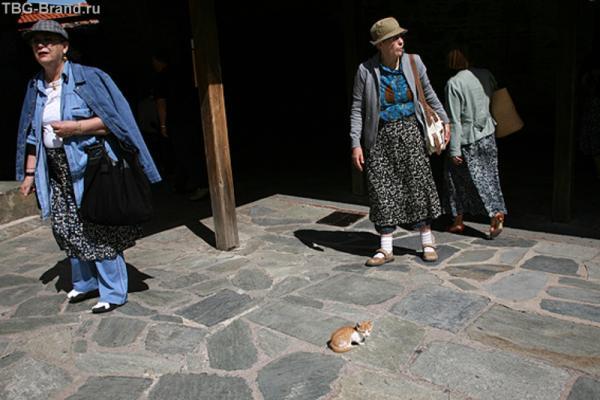К радости туристок в монастырях много голодных кошек и котят, которые с благодарностью съедят и хлеб.