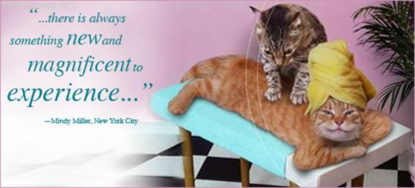 Спа для кошек
