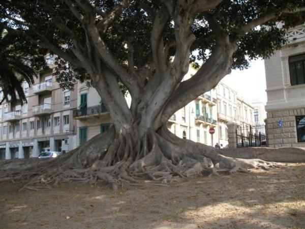 Итальянские корни