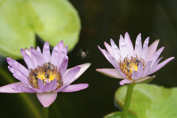 правильные пчёлы в Императорском дворце