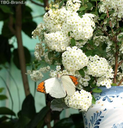 Бабочки замка Гулэн