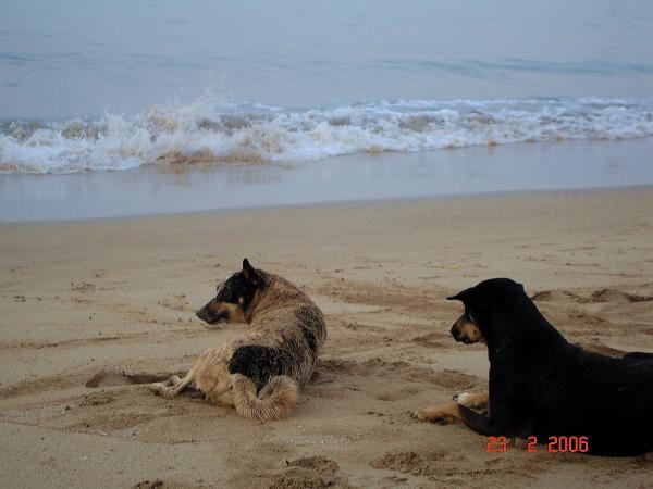 Морские псы