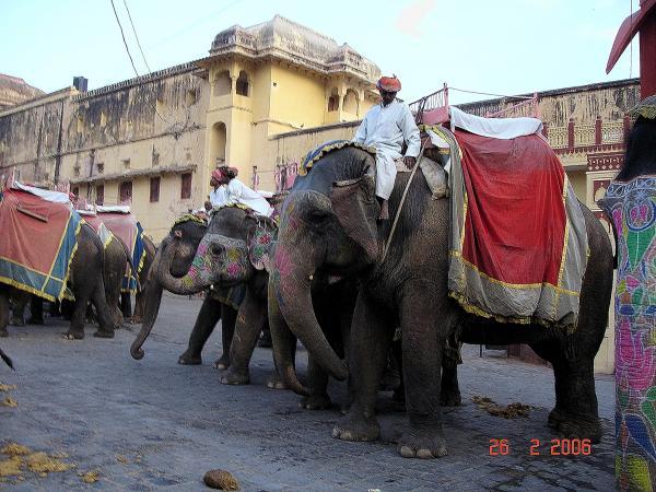 Слоны нас ждут