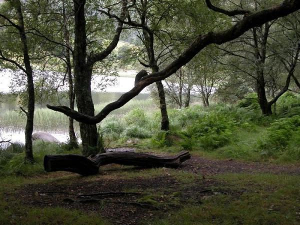 Сказки островного леса