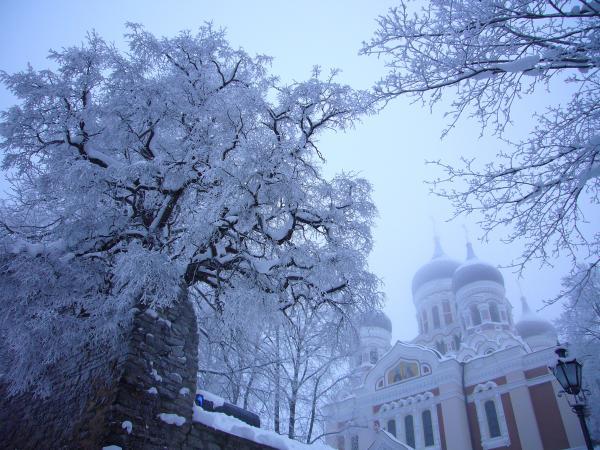 Зимний день в Таллинне