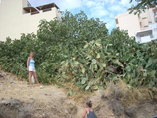 Инжир и кактусы