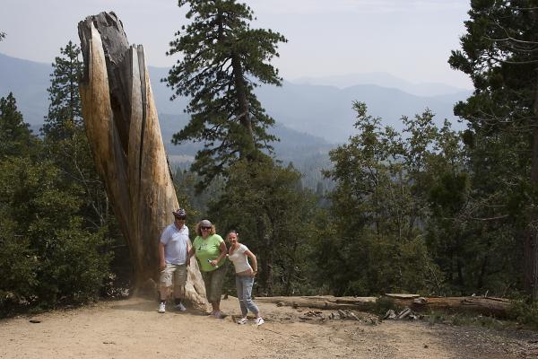 а вот это самое старое дерево, вернее обрубок, сосна какая-то