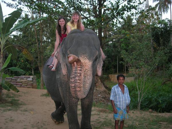 Слоны, на самом деле, очень волосатые!)))