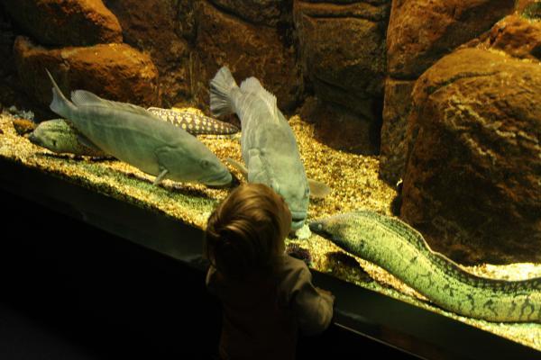 Рыбки смотрят на Суслика