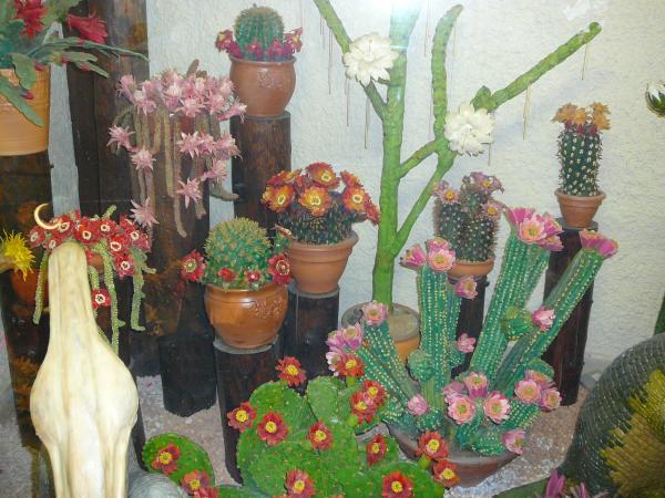 кактусы из марципана - красота!