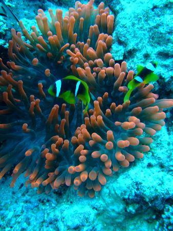 рыбки Немо