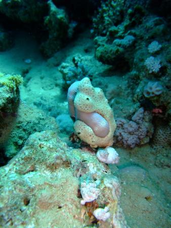 что бы ни подумали, это коралл