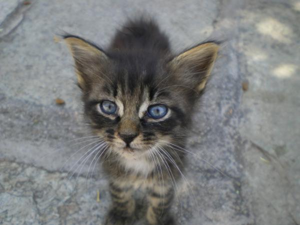 Какие голубые глазки!