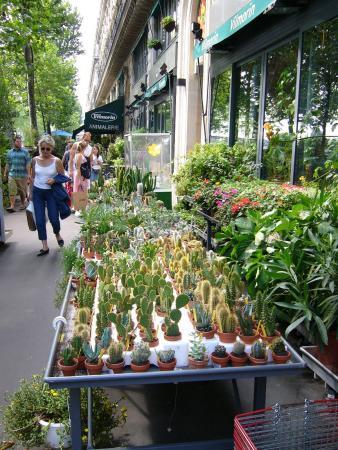 Парижские кактусы
