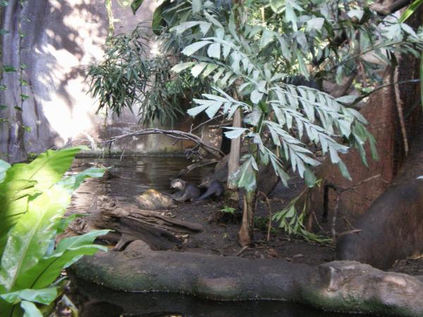 В павильоне Индонезийские джунгли