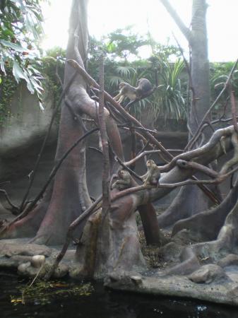 Макаки в павильоне Индонезийские джунгли