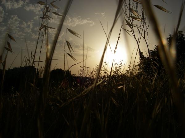Золотое поле.