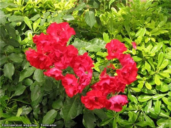 Цветы в Топкапе