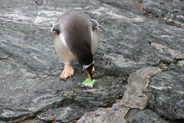 С горя б закурить, но промокли все спички. Пингвин в аквариуме г.Берген