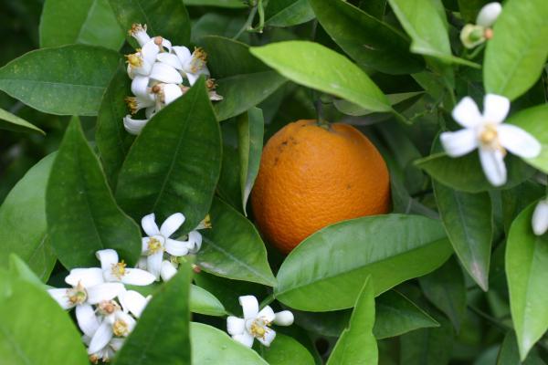 и цвет, и плод!