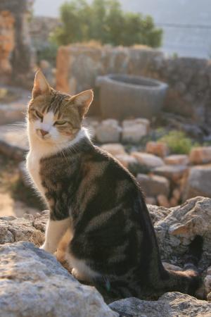 Крепостные кошки