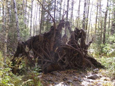 Живописный осенний лес