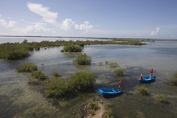 Заповедник Лас-Салинас - гектары мангровых зарослей и позрачной виды
