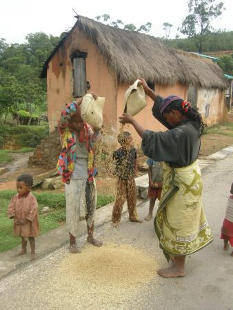 Так просеивают рис