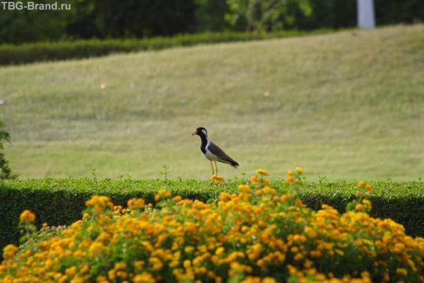 Неопознанная птичка