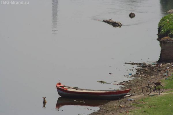 Пес в реке