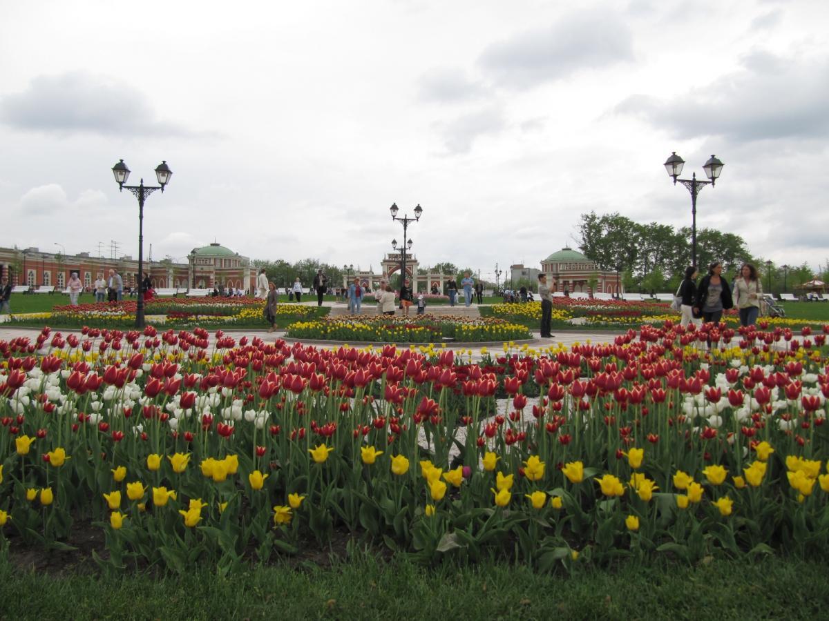 Тюльпан в москве