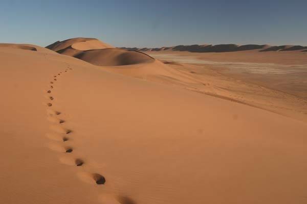 Полупустыни и пустыни России интересные области во всем  Полупустыни и пустыни России интересные области во всем
