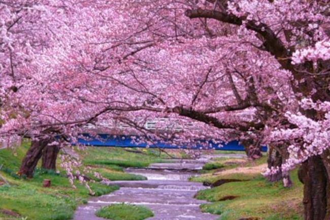Япония удивительная страна где