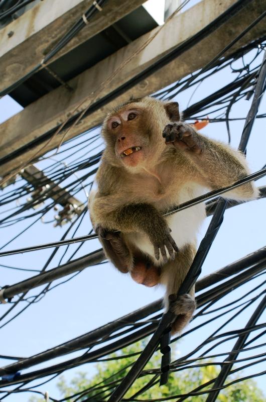 Фото с обезьянкой.  Часть 1: Лопбури.