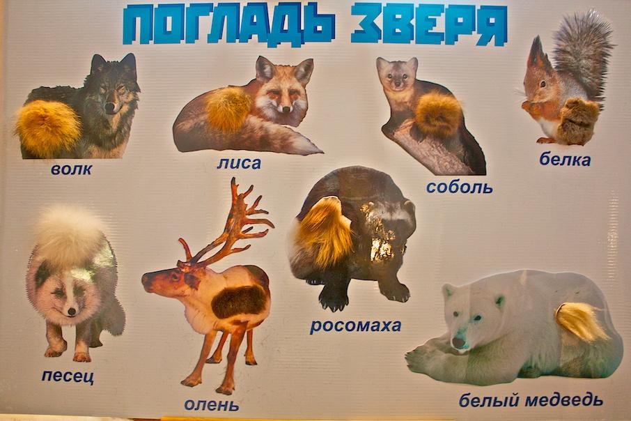 Редкие животные из красной книги