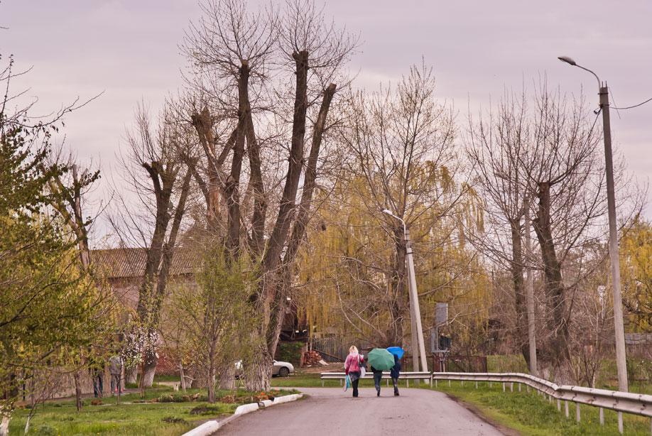 Старочеркасская и Слон красоты