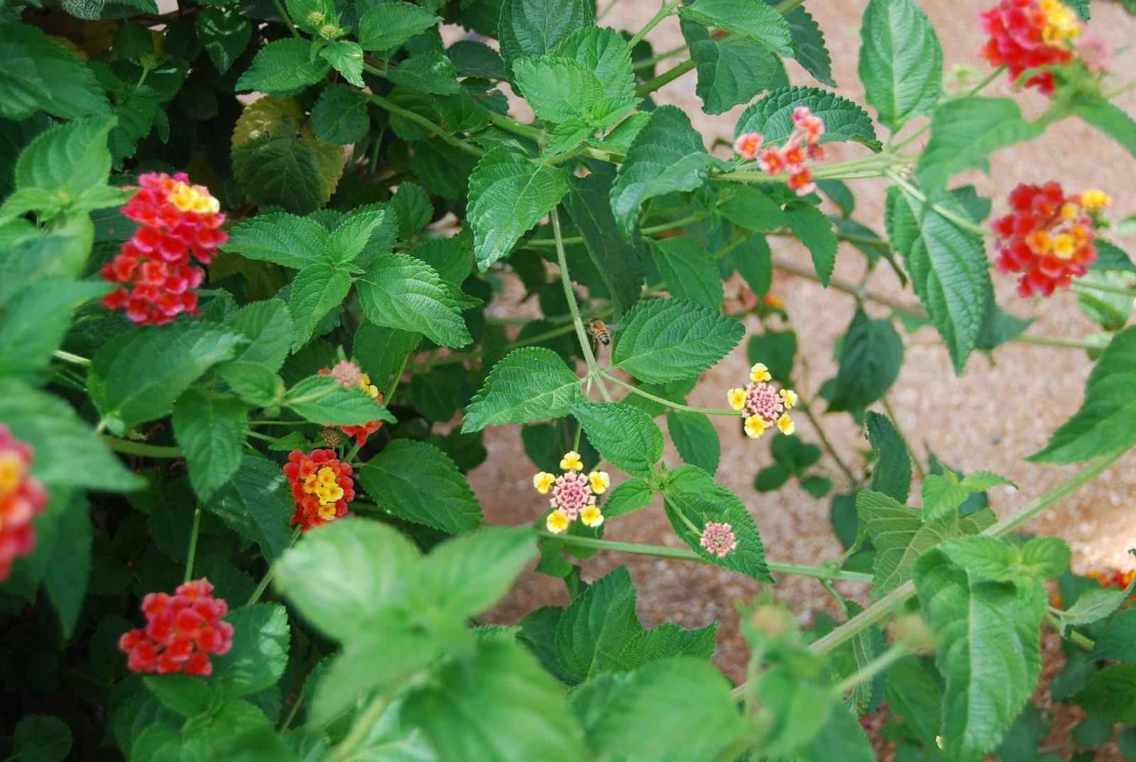 Хна артколор цвет