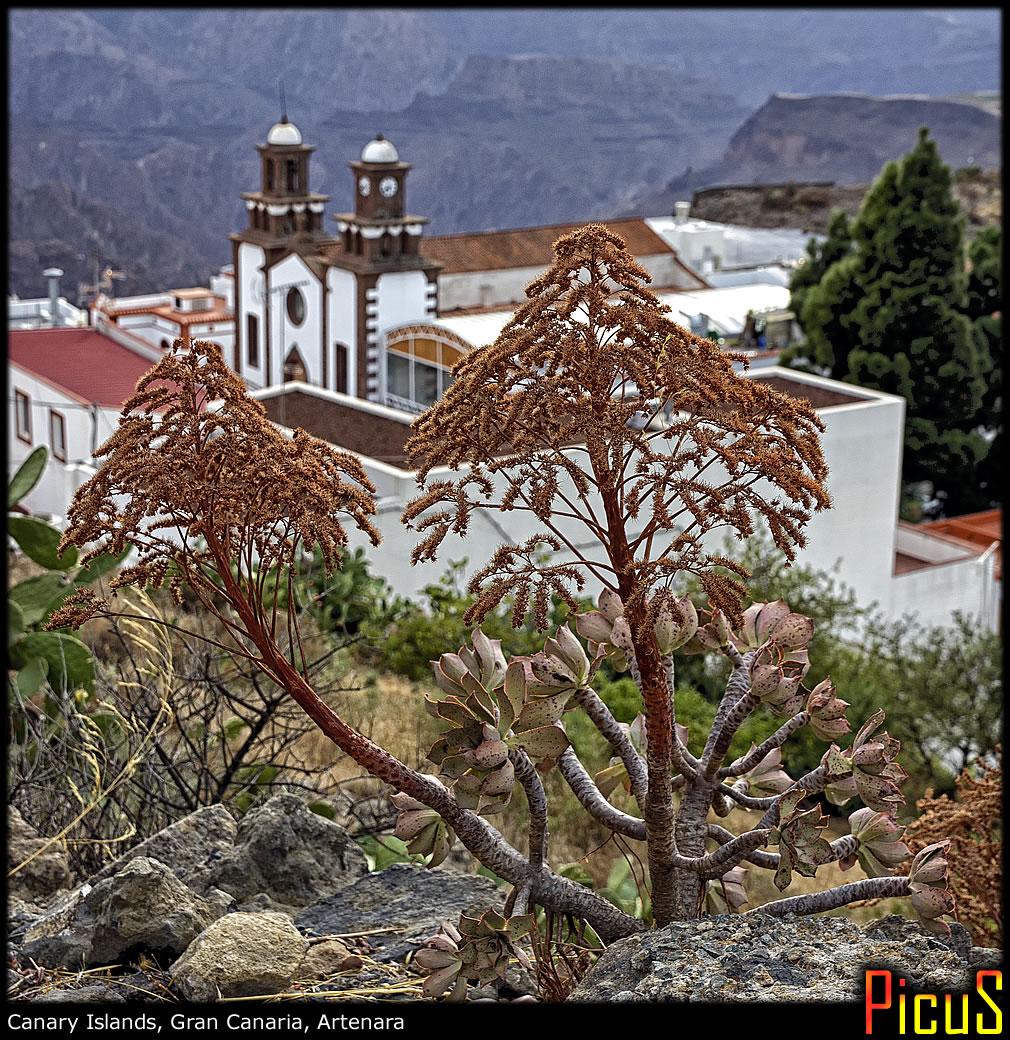 Вулканический гигантизм и пустынный городок