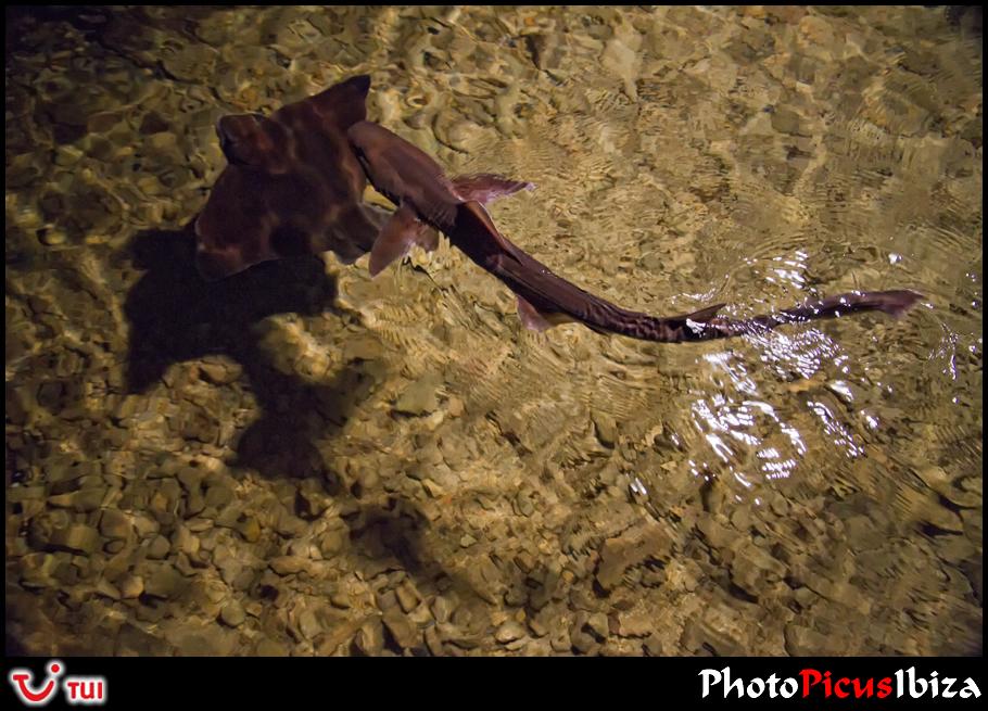 IBIZA / Акулы
