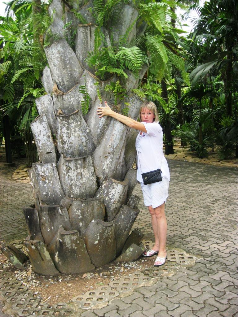Я и пальма!