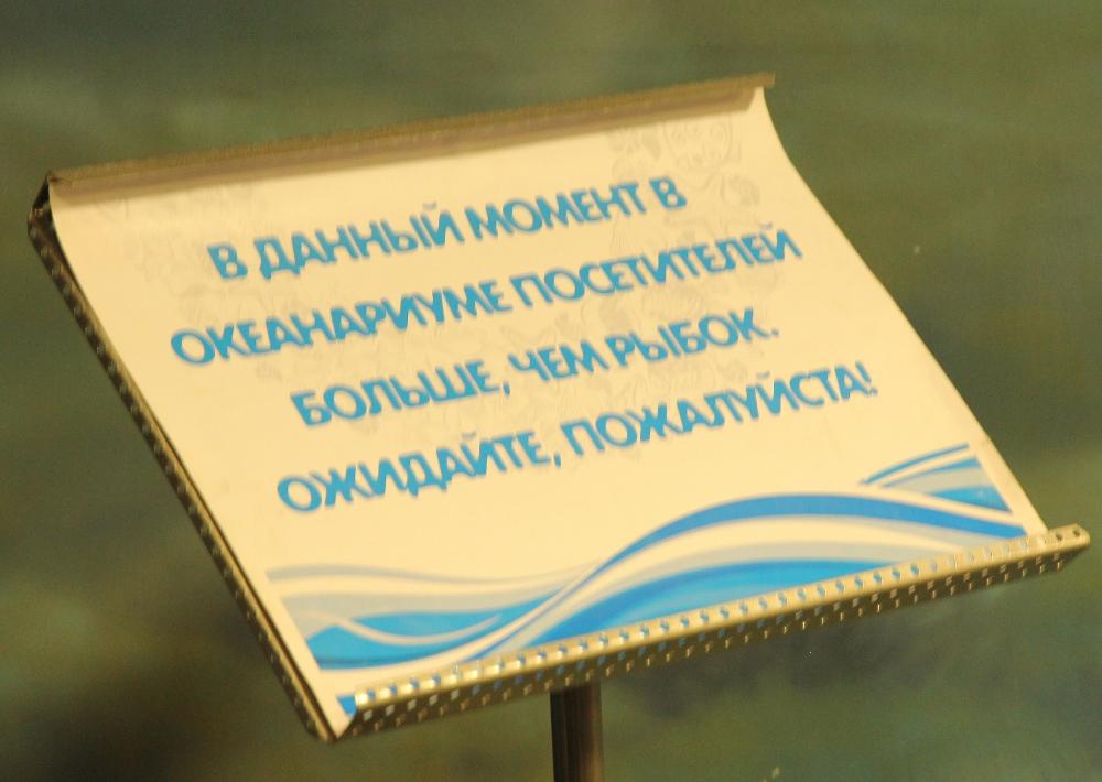 Мечты об отпуске. Океанариум, Москва.