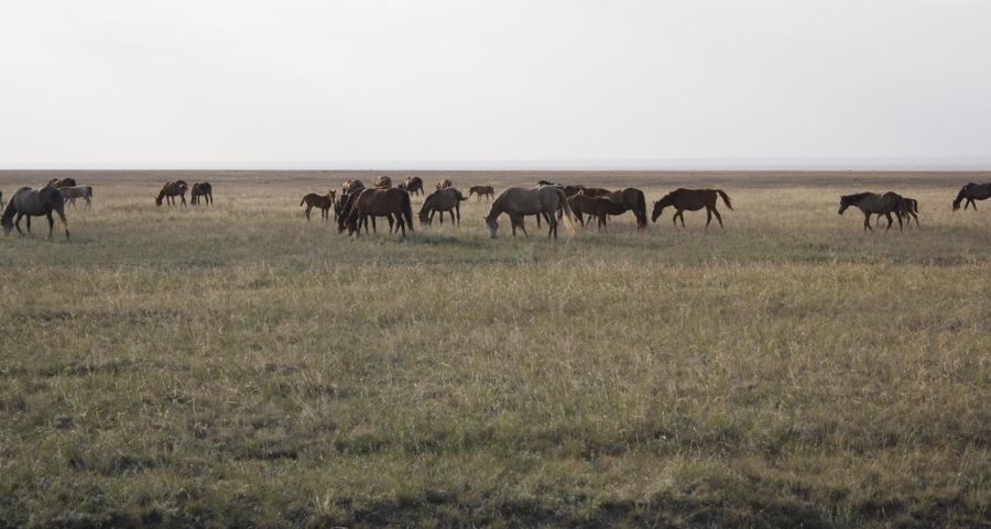 Автопутешествие по Казахстану, день 2: от границы до Караменды