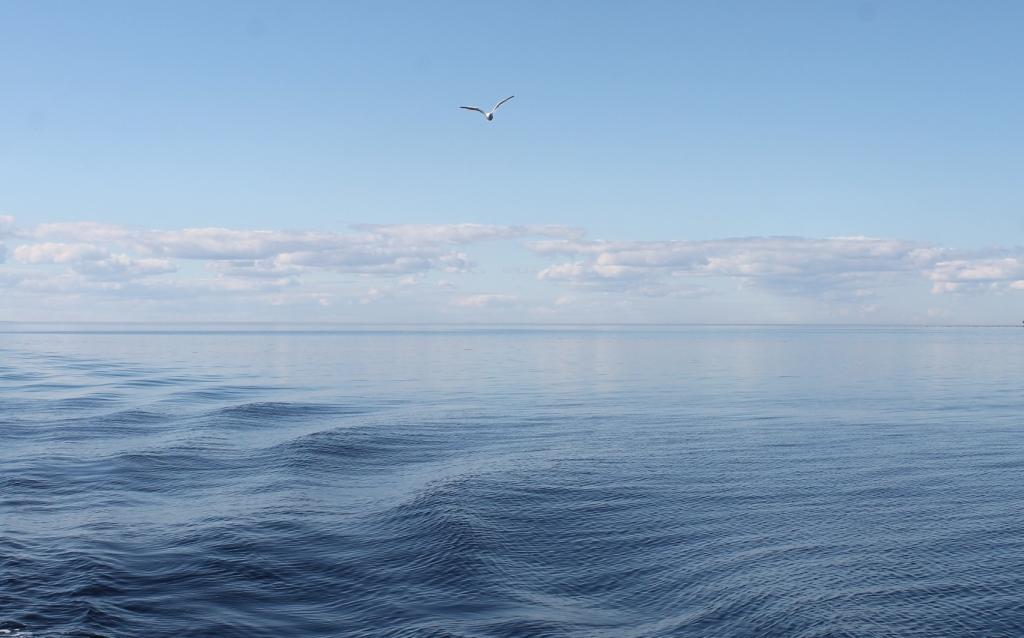 нас познакомило лето там где море