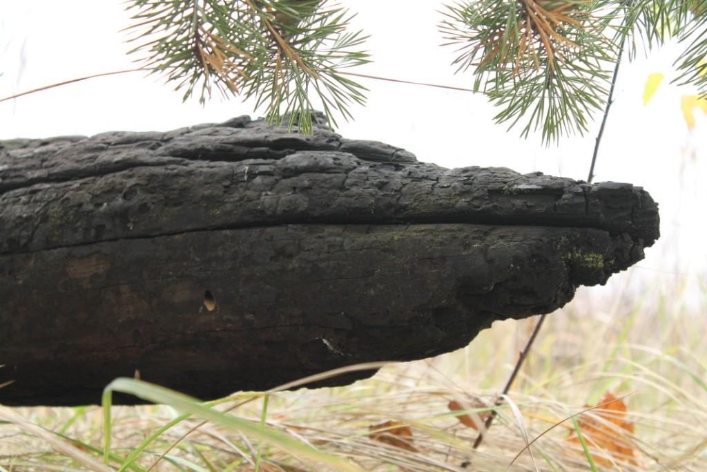 Крокодилы в лесах Донбасса.