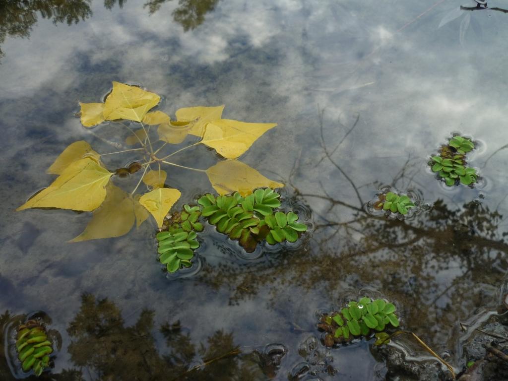 На байдарках по золотой листве.