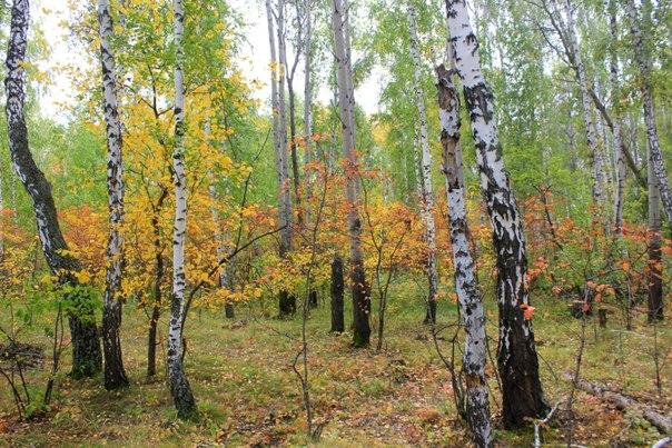 Осень в небе. Лесные дорожки.