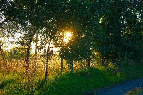 Вечерний лес или в поисках