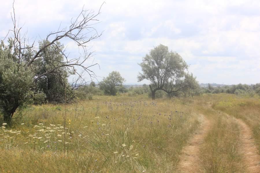 Анапа - точка пересечения четырех природных ландшафтов мира.