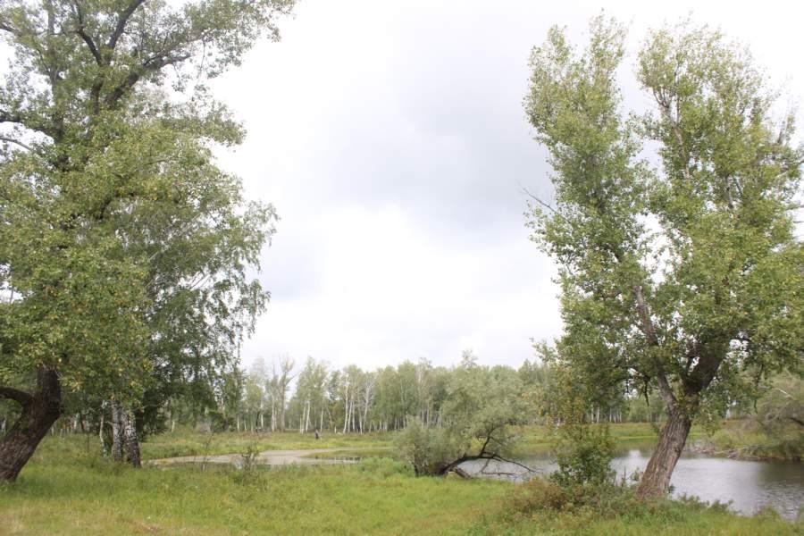 Поездка на Российский Стоунхендж – святилище Савин. (Курганская область)